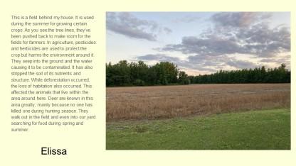 field near the house