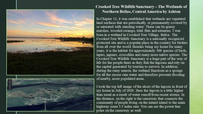 Crooked Tree Wildlife Sanctuary – The Wetlands of Northern Belize, Central America by Ashton